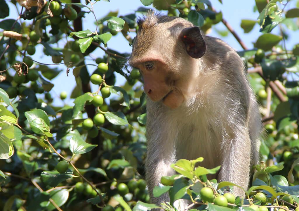 Auch die Bäume sind beliebte Plätze für die Affen