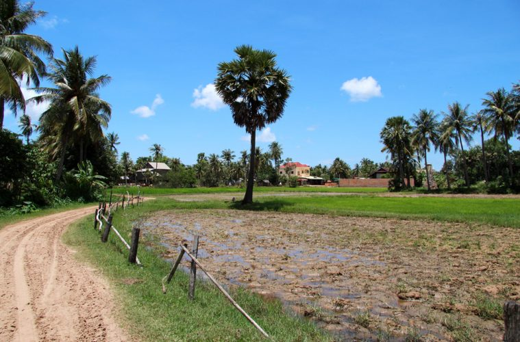 The landscape in Cambodia