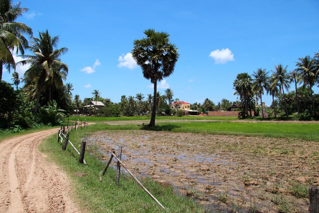 The landscape in Cambodia