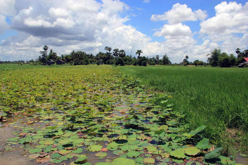 Nature in Cambodia
