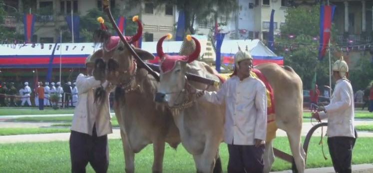 Bonn Chroat Preah Nongkoal – die königliche Pflugzeremonie