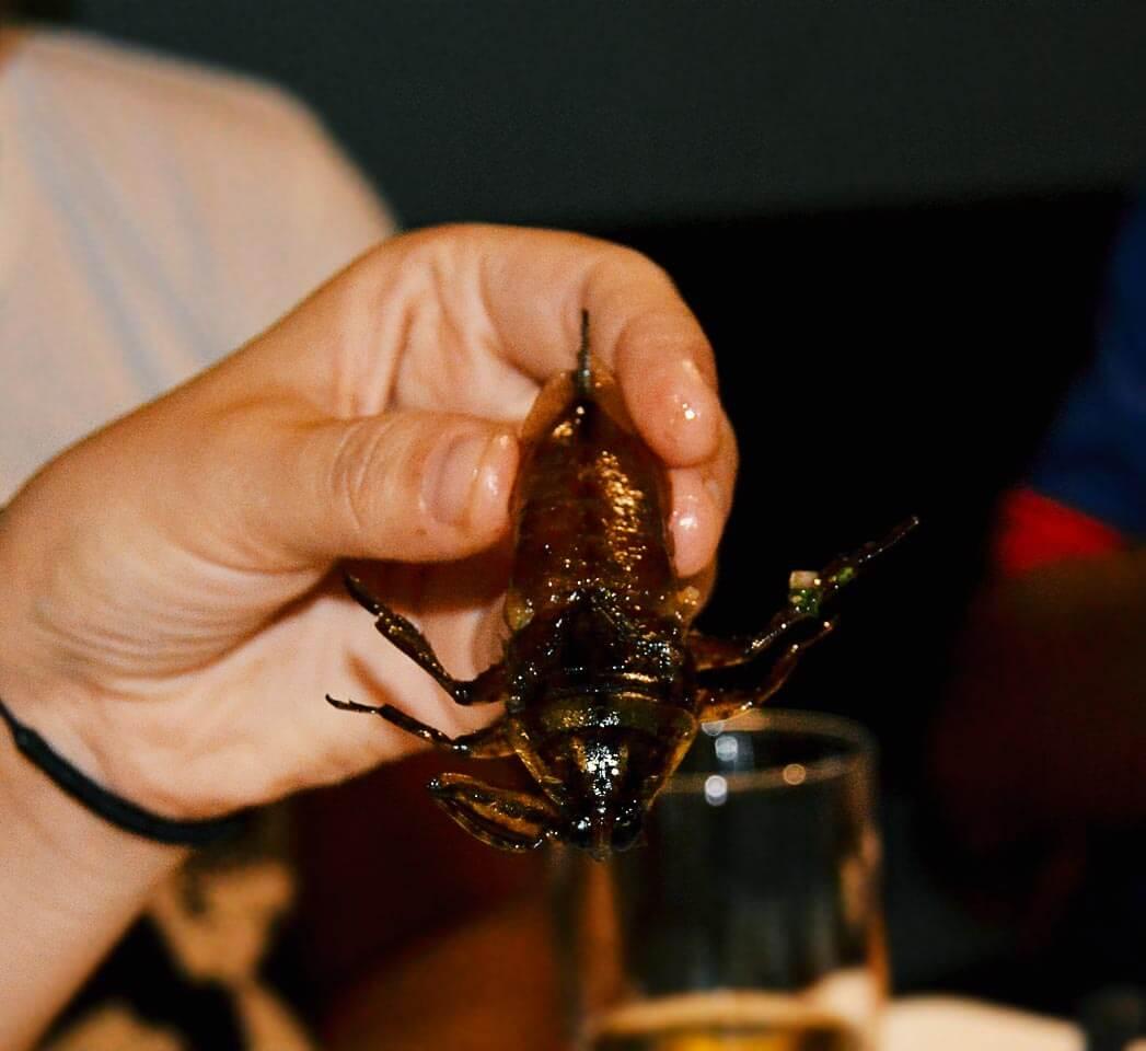 Insekten im Bugs Restaurant in Siem Reap