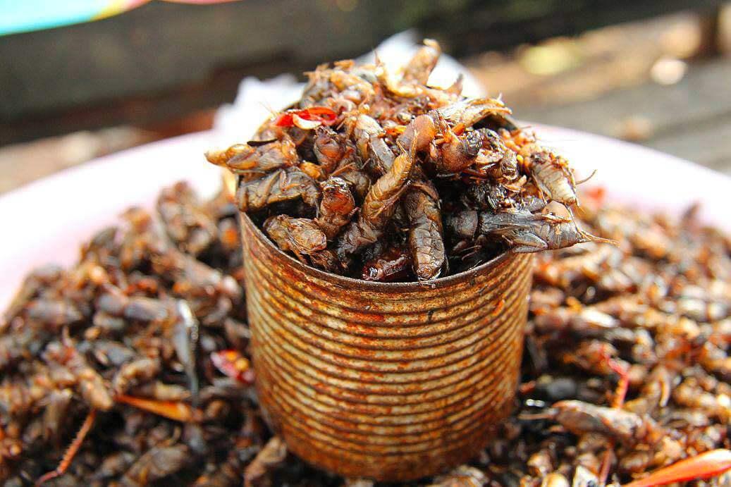 Insekten auf einem Markt in Siem Reap