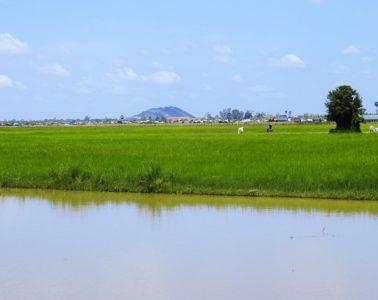 Weitblick über das Feld zum Phnom Krom im Süden von Siem Reap