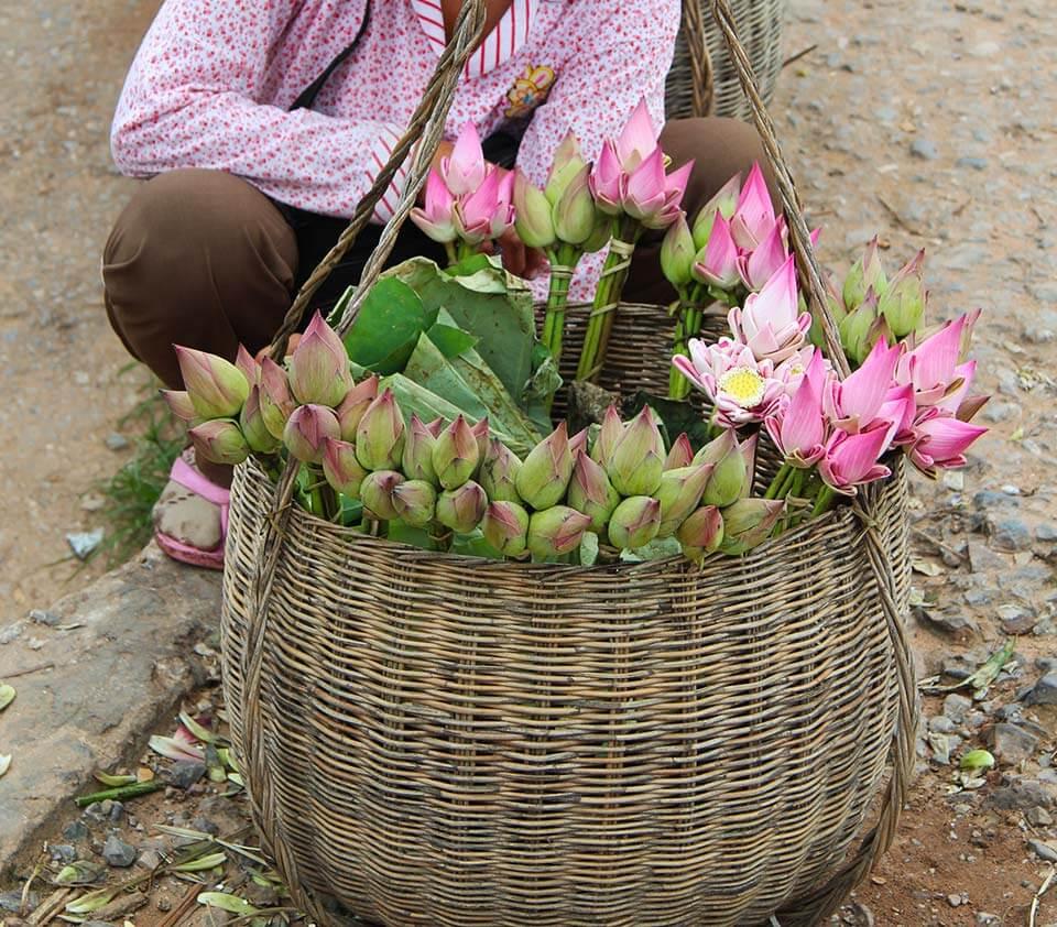 Lotus - Pshar Leu Markt, Siem Reap