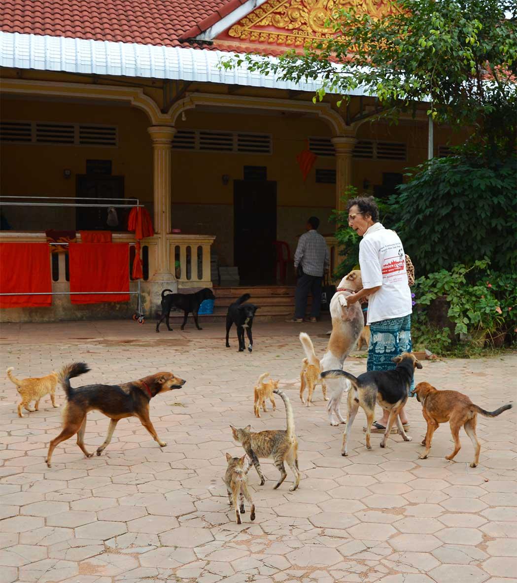 Pagoda Cats - Siem Reap, Josette Vanneur