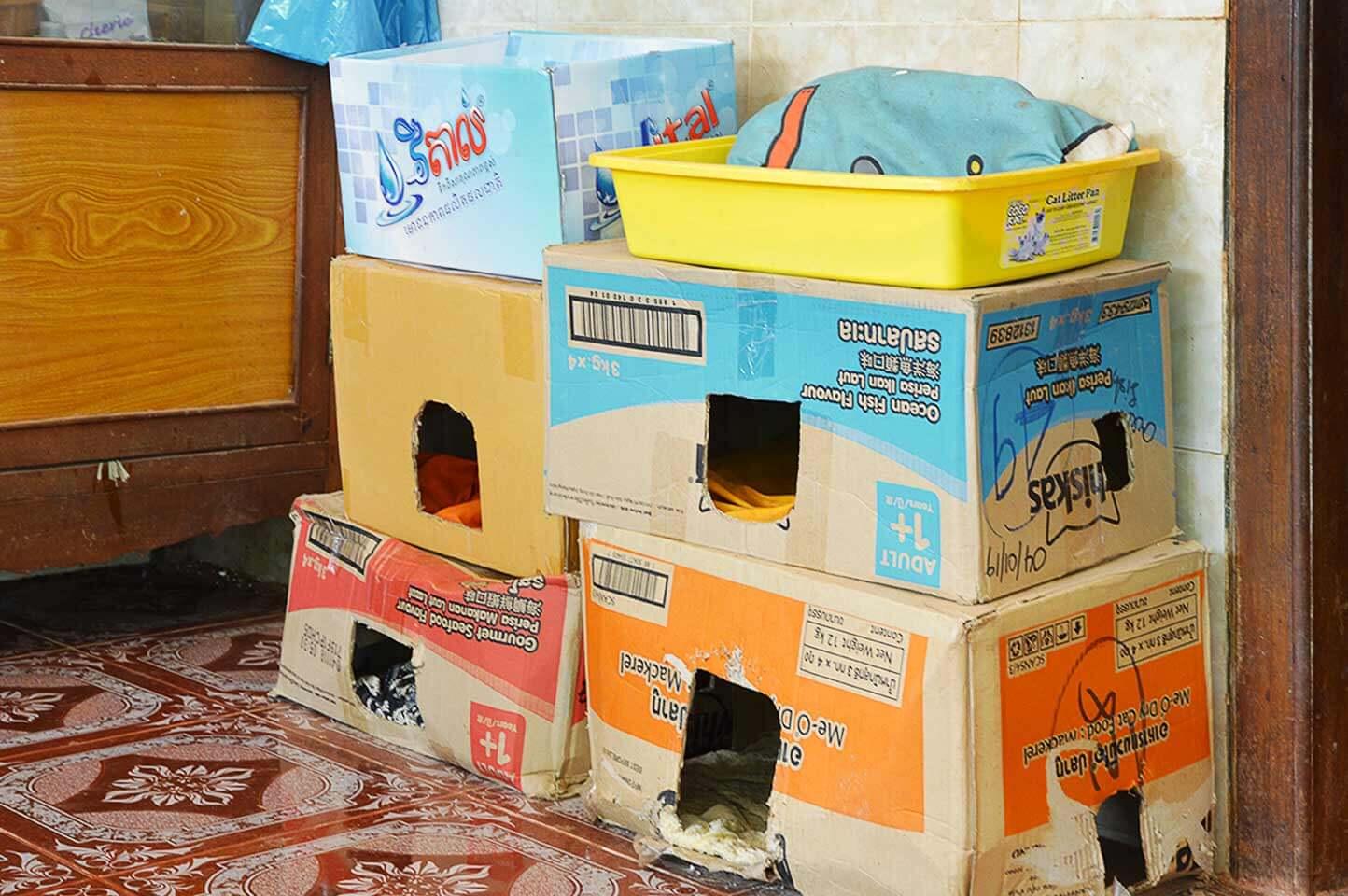 Katzenkörbchen aus Karton in der Cats Pagode in Siem Reap