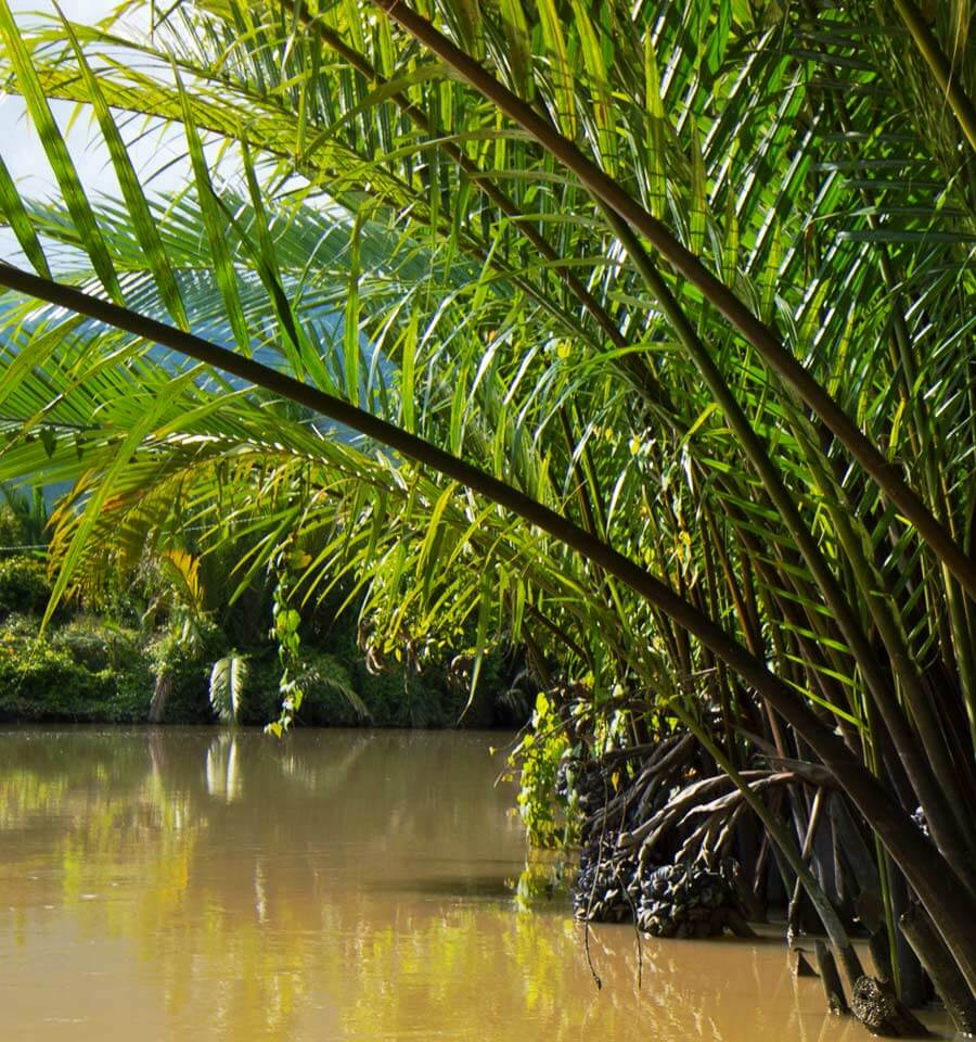 LoveTheRiver Nipa Palme - Prek Thom River, Kampot in Kambodscha