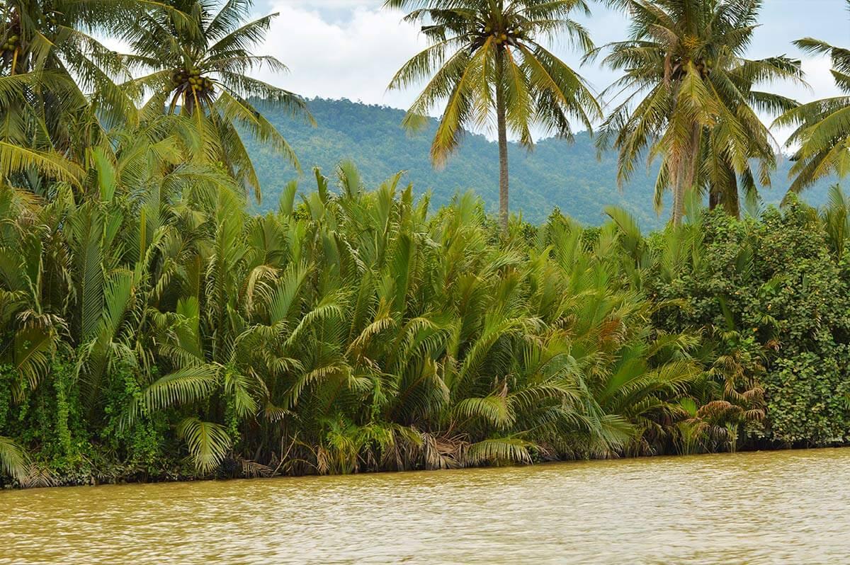Ufer mit Urwald - Kampot River, Bootstour