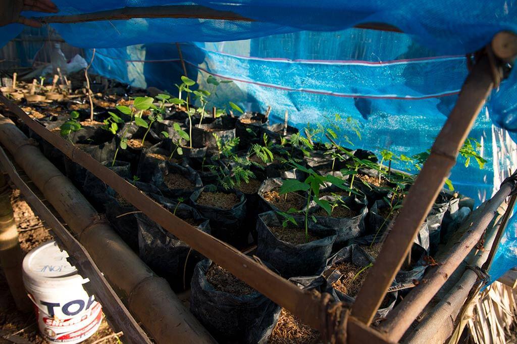 Mangobaäumchen im Community Garten | Lean Dai Kommune Kambodscha