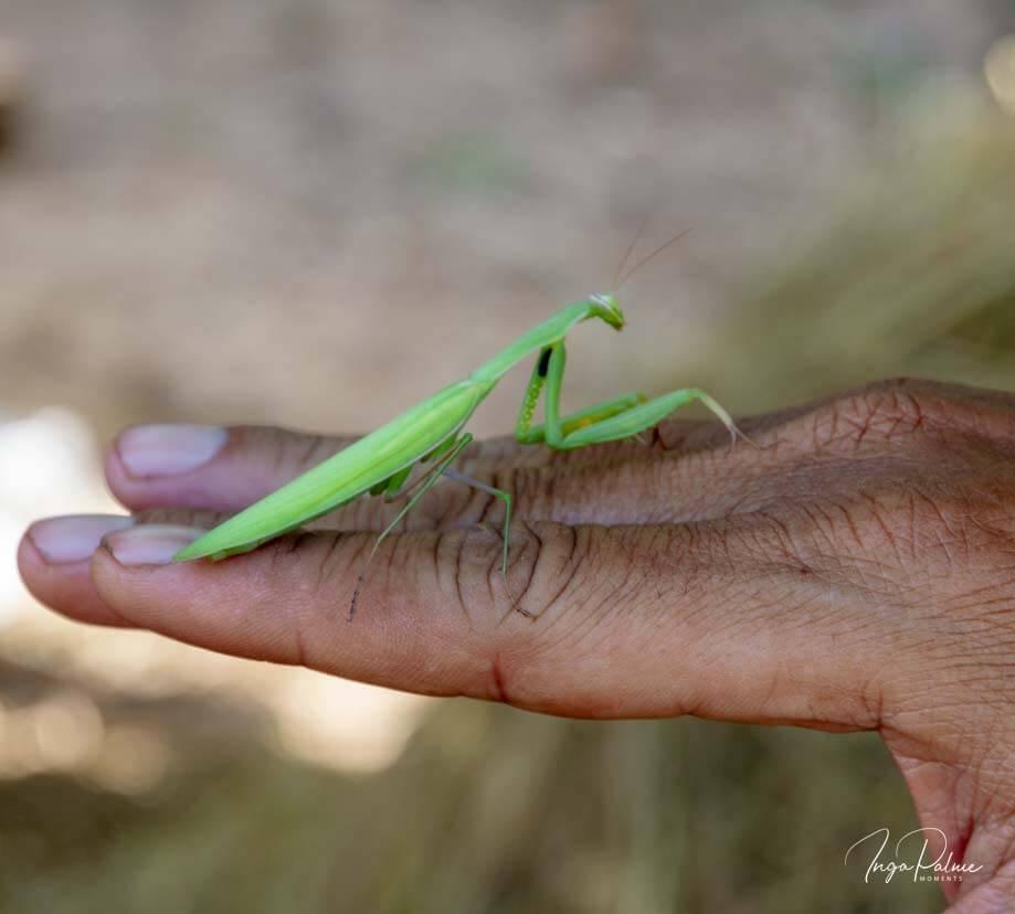 Grünes Insekt auf der Hand von Dani Jump während seiner Tour