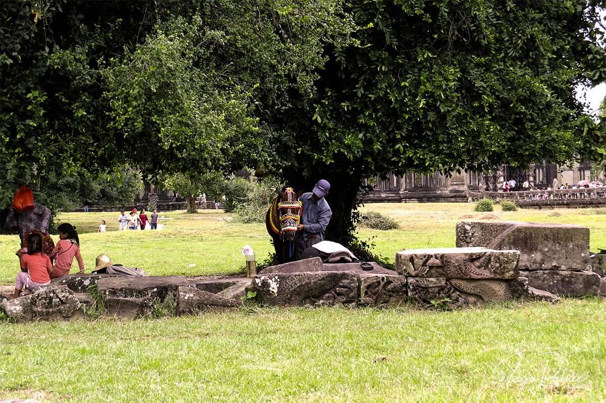 Angkor Wat - ein Pferd wird unter einem Baum gezäumt