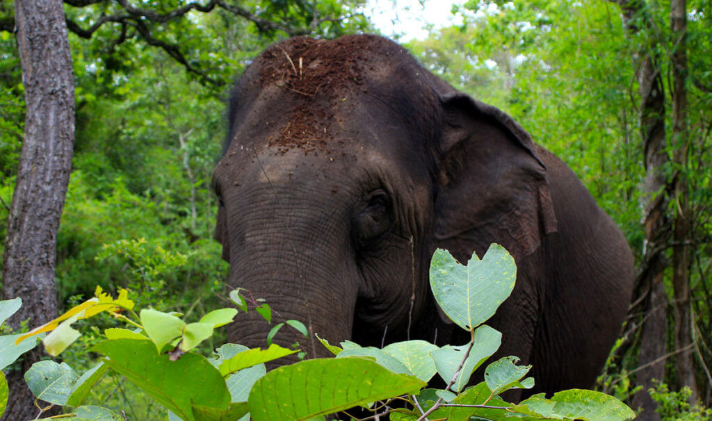 Rundreise Kambodscha - z.B. zu den Elefanten nach Mondulkiri