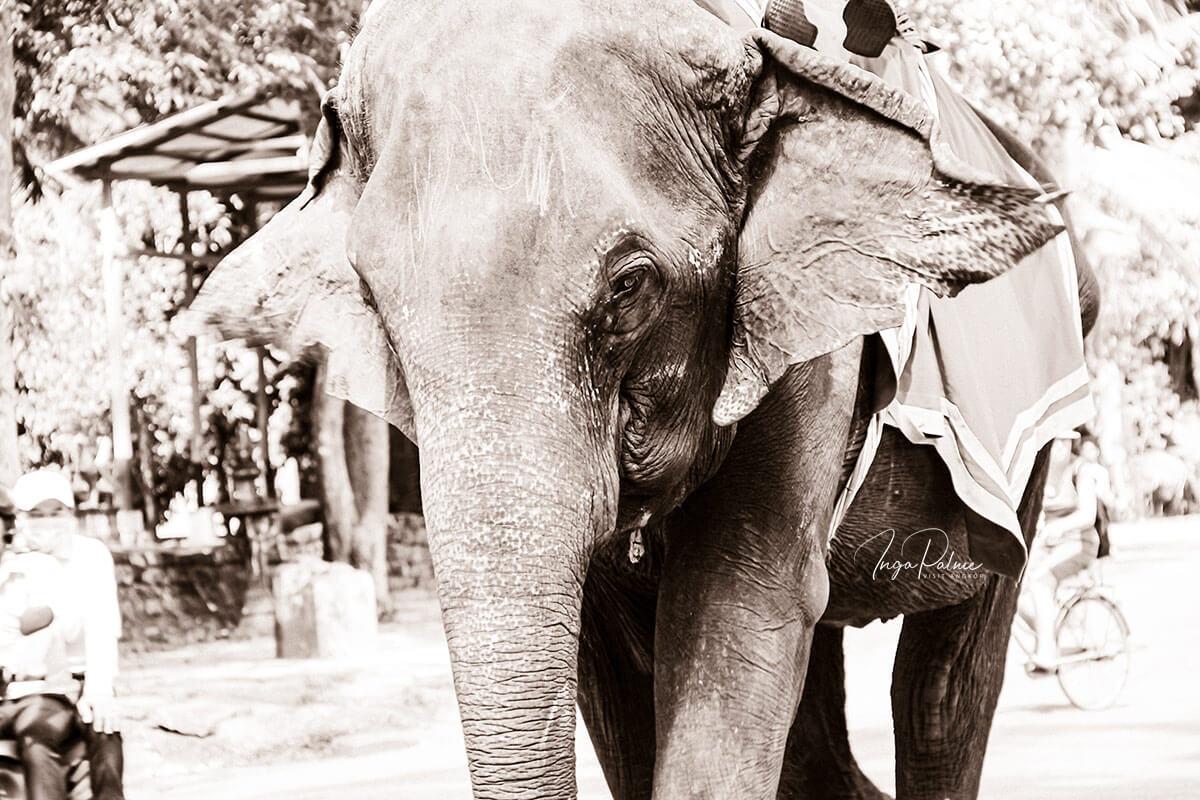 Angkor Aktuell – Ausgabe 1