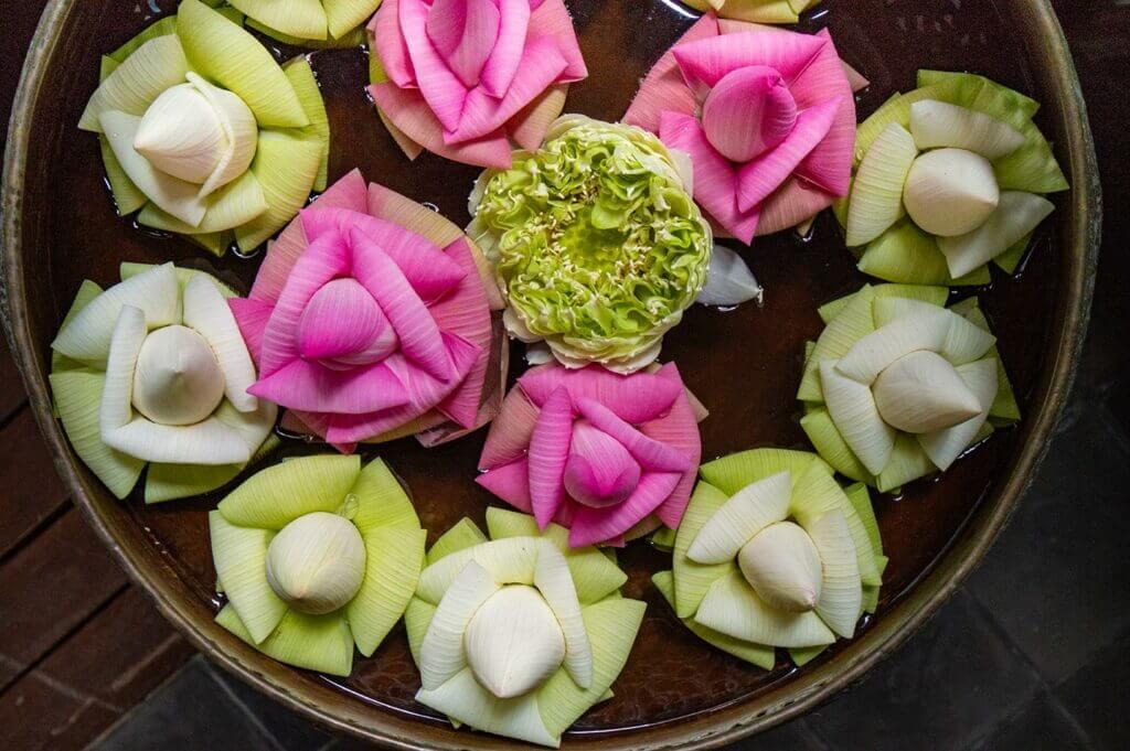 Umfaltete weiße und rosa Lotosblüten in Kambodscha