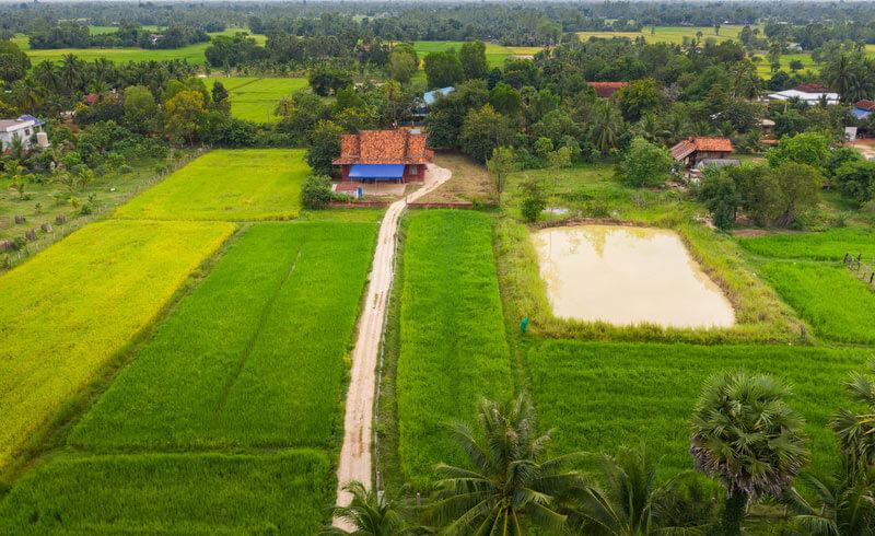 Reisfelder in der Provinz Takéo, Kambodscha