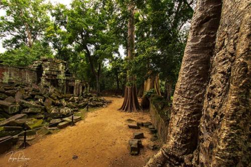 ta-prohm-angkor-tempel