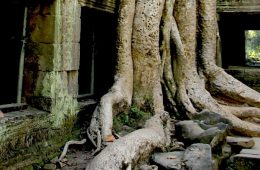 Ta Prohm - Temple of Angkor, Cambodia