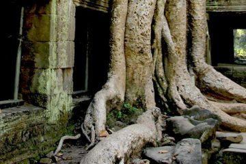 Ta Prohm - Temple of Angkor, Cambodia