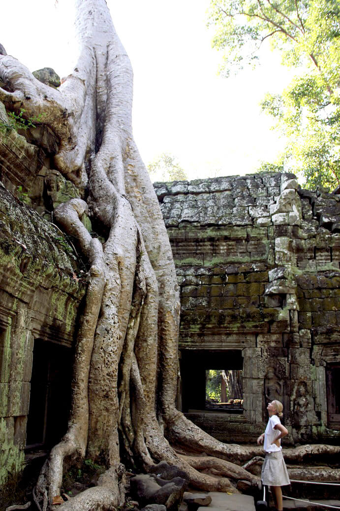 Ta Prohm Tetramelaceae tree