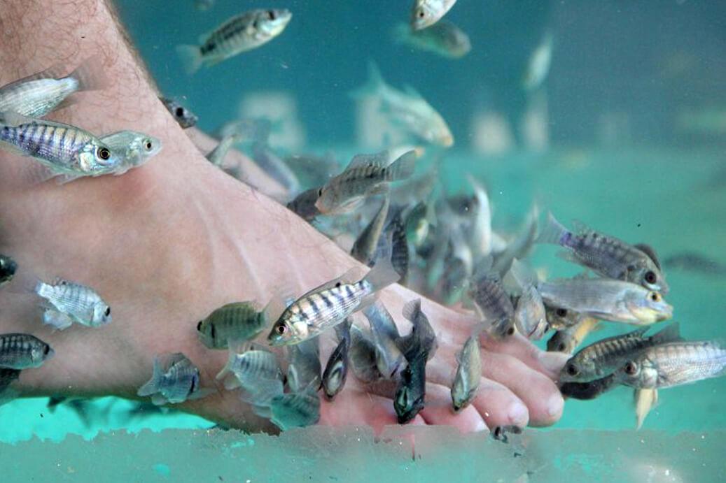 Fish massage in Siem Reap