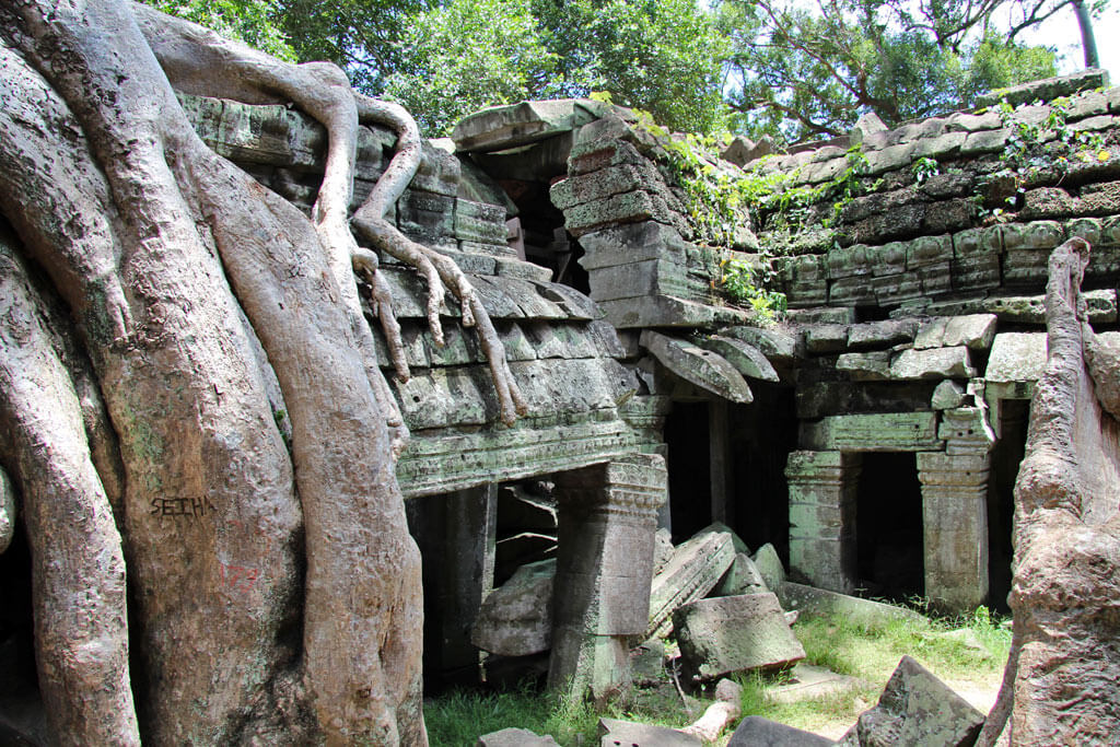 gum-trees-ta-prohm
