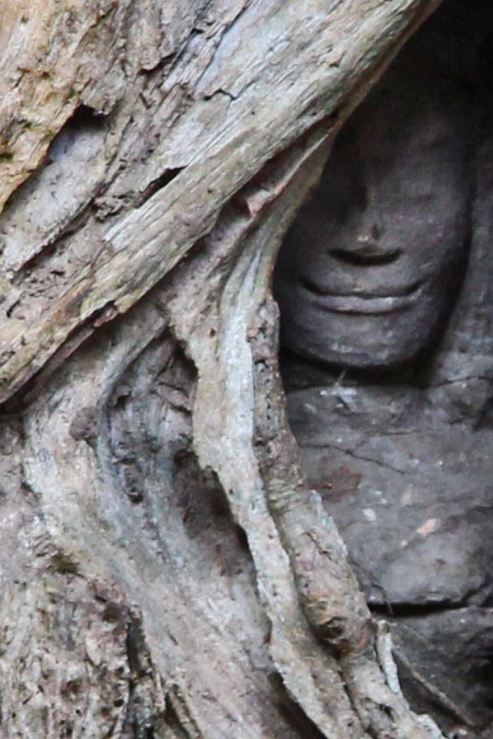 Ta Prohm Temple – amazing natural spectacle