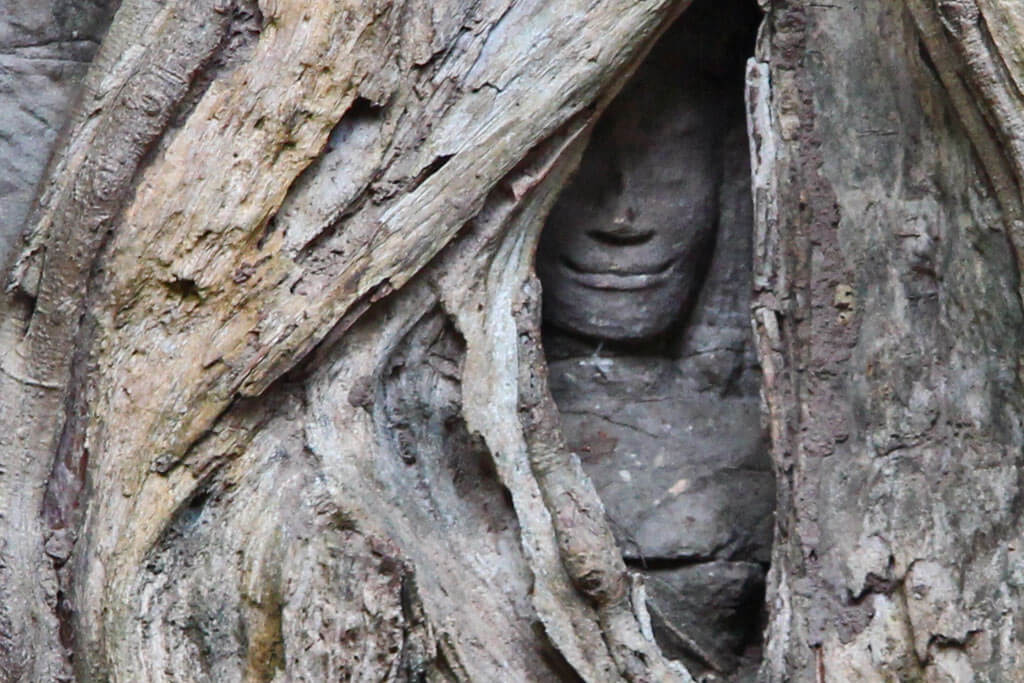 Ta Prohm: Giant root's trees all over the temple