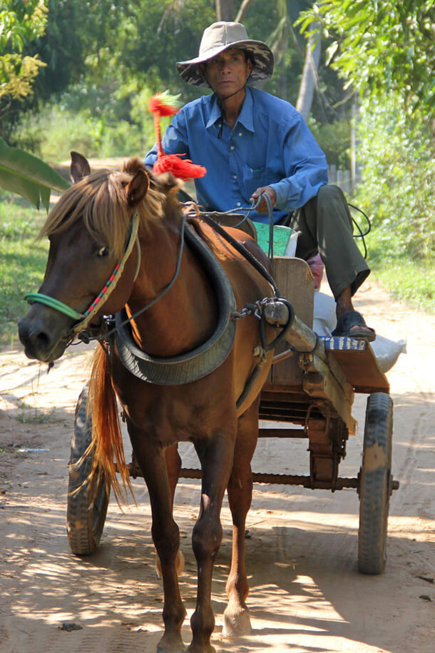 Horses are not very often used for tranports in Cambodia
