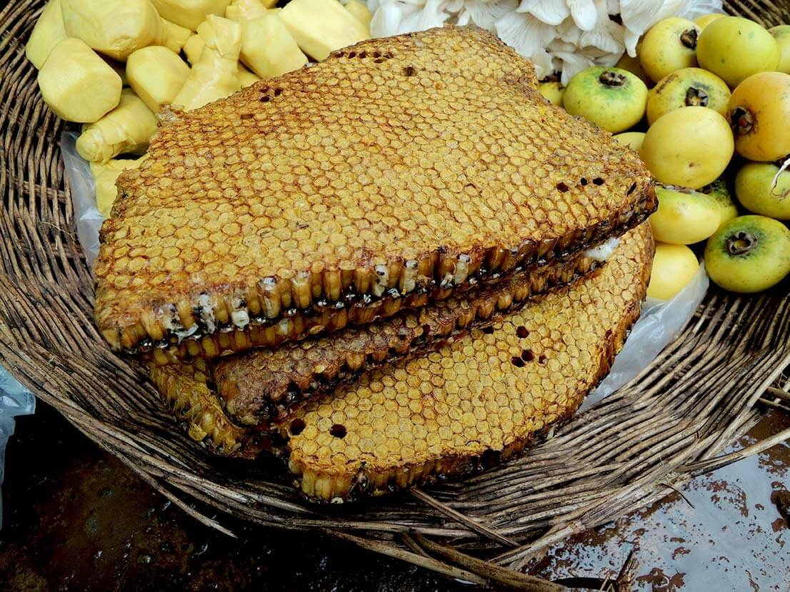 Giant Honeybee Brood Comb