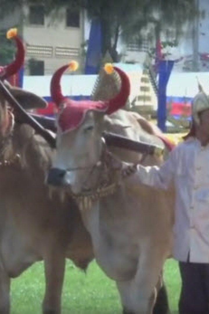 Bonn Chroat Preah Nongkoal – the Royal Ploughing Ceremony