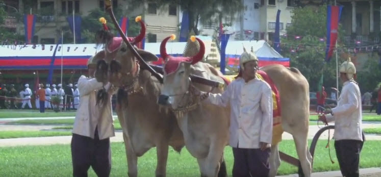 Royal Ploughing Ceremony | Screen Video Hanuman Travel
