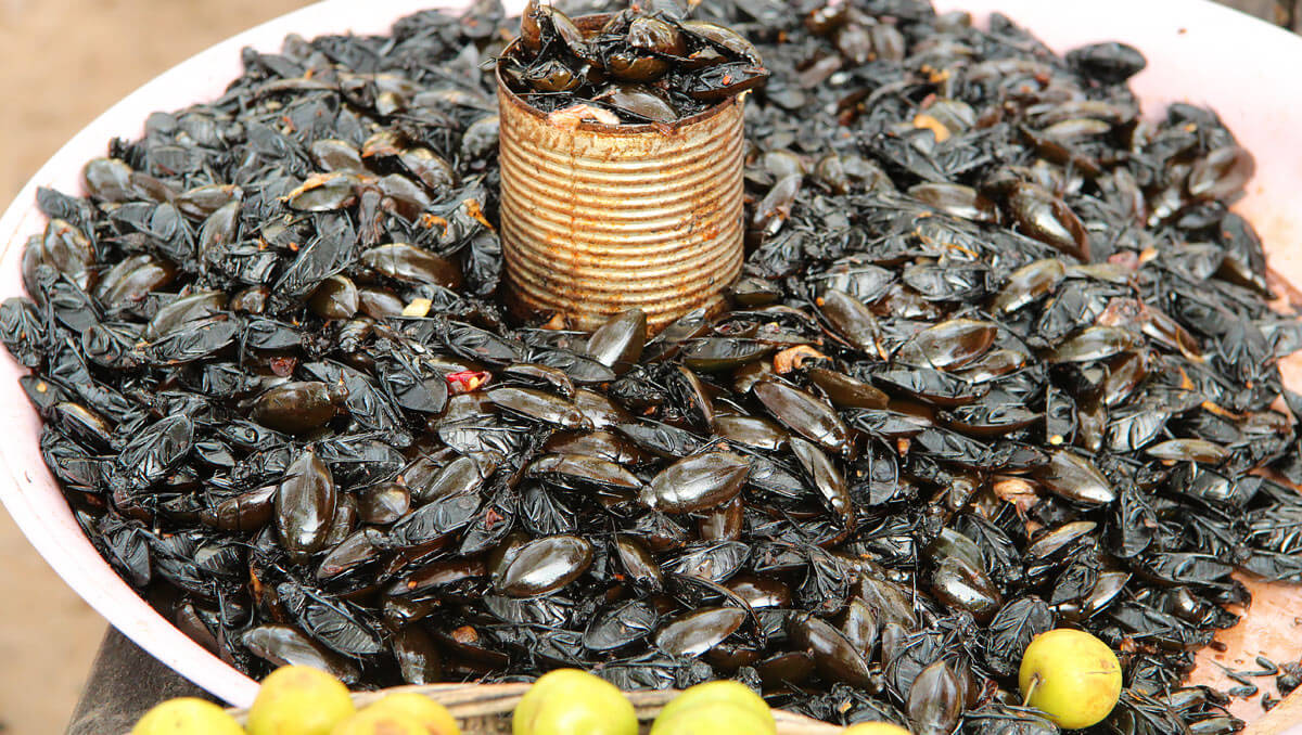 Beetles - snack market Siem Reap